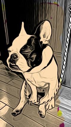 pet salon RANKIN DOG/ランキンドッグ